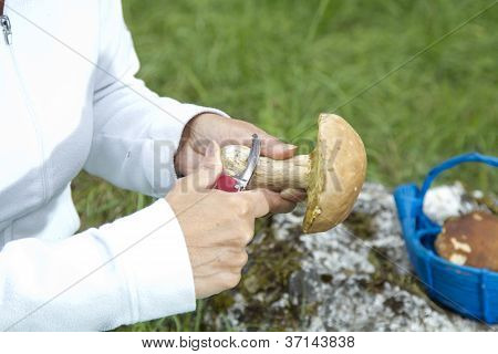 Cleaning mushroom Boletus Edulis