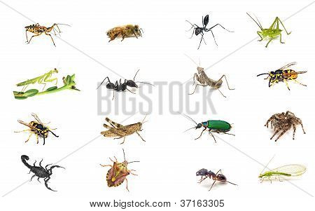 Set Insekten, isolated on white