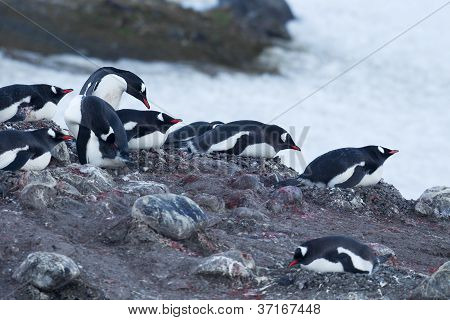 group of penguin in beach