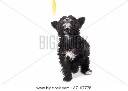 image of a black hairy dog