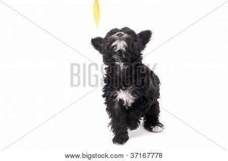 image of a black hairy dog