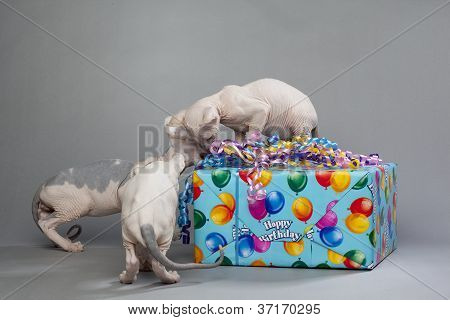 three cute puppies opening gift