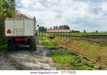 Tractor Used  For Transport Of Beets