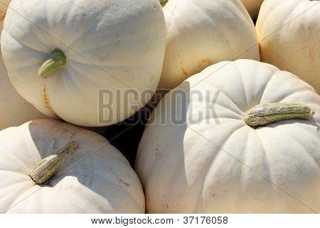 White boer pumpkins at the farmer's market
