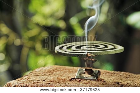Green spiral insect repellent mosquito coil incense smoking.