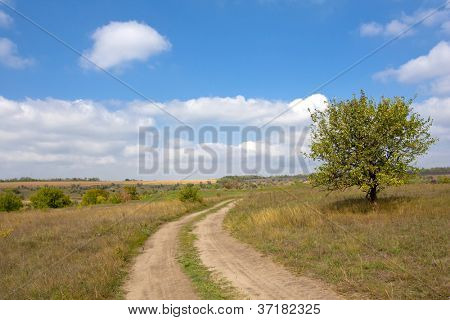 Countryside road in steppe in nice autumn day