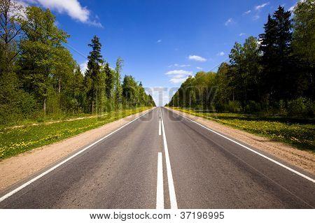 Asphalted Road (spring)