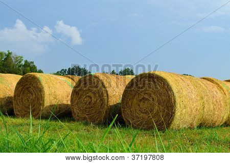 bails of hay in a field