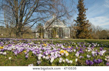 Spring Greenhouse