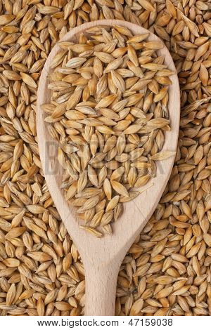 Barley In A Wooden Spoon