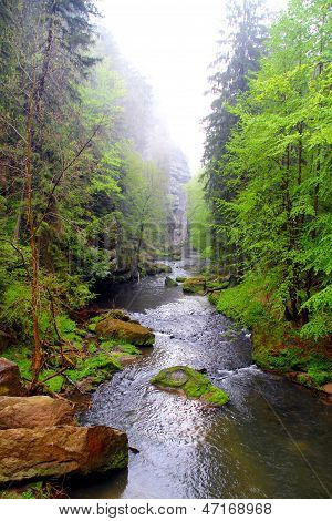 Autumn Sumava forest
