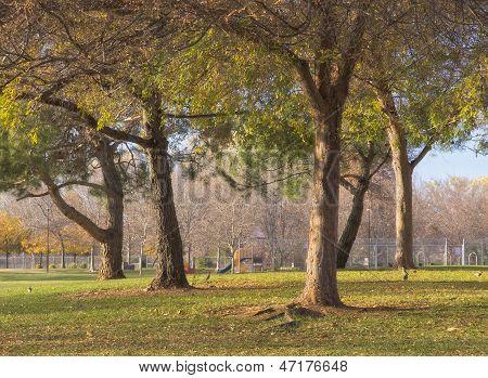 Public Park in Beautiful Light