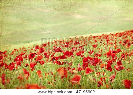 Vintage photo of poppies on green summer field
