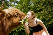 picture of highland-cattle  - pretty young woman is kissing a highland cattle - JPG