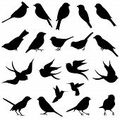 stock photo of hummingbirds  - Large and Detailed Vector Collection of Bird Silhouettes - JPG