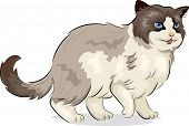 Illustration of a Ragdoll Cat
