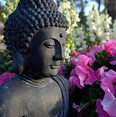 Постер, плакат: Будда и цветет