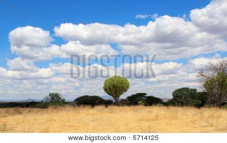 Savanna landscape with cactus tree