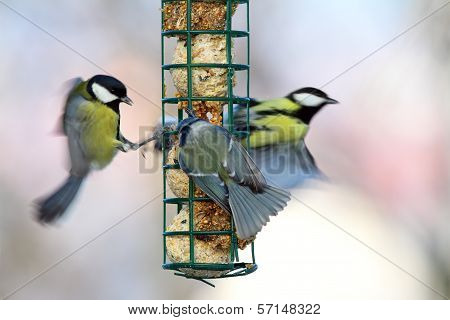 Big Starvation At Bird Feeder