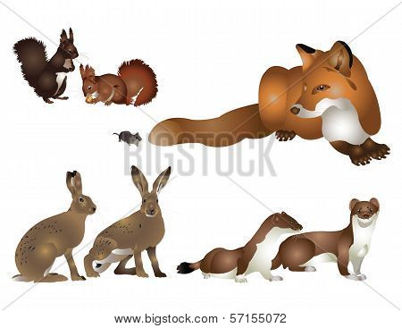 Collection of wild mammals