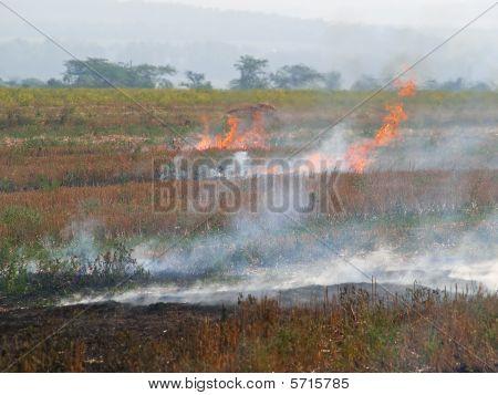 Fire On An Autumn Field
