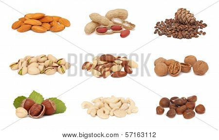 Piles Of Nuts Collection