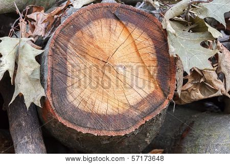 wooden trunk with leaf