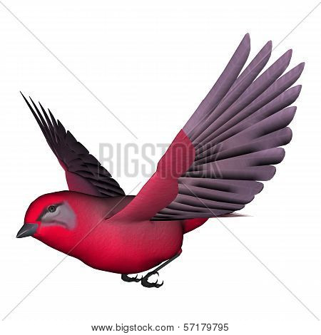 Songbird Tanager