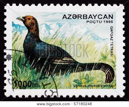 Postage Stamp Azerbaijan 1995 Caucasian Grouse, Bird