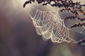 image of condensation  - spider web plant natur macro color  background - JPG