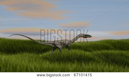 walking coelophysis small dinosaurus