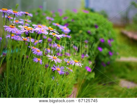 Summer Garden With Flowers