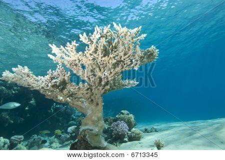 tropischen Korallenriff