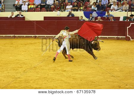LISBON - JUNE 19: Diogo Peseiro bullfighter performs at a portuguese style bullfighting show in campo pequeno in Lisbon, Portugal, June 19, 2014