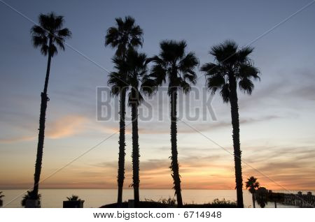 Beautiful ocean sunset with palm trees