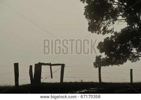 Fenced In Fog