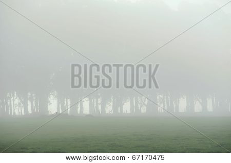 Foggy Farm Trees