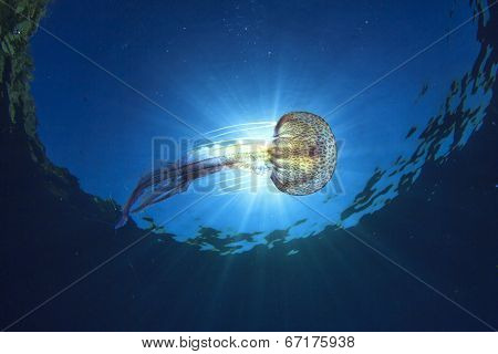 Jellyfish underwater and sun