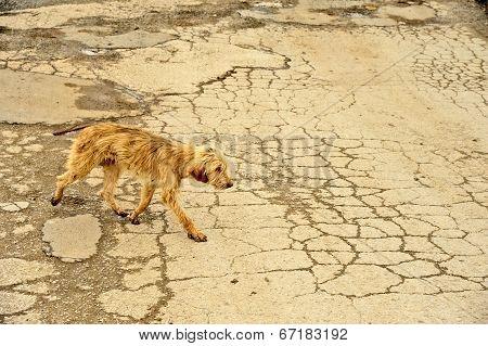 A dog walking on corroded asphalt road in Ohrid