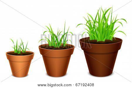 Growing grass.