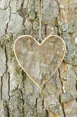 foto of carving  - carved wooden heart on tree bark as symbol for love - JPG