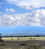 picture of kilimanjaro  - Grant - JPG