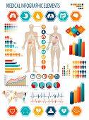 stock photo of internal organs  - Medical infographics elements - JPG