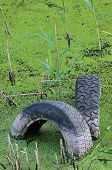 foto of discard  - Discarded old tyres in contaminated pond puddle water pollution concept vertical green sweet grass duckweed manna - JPG