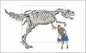 picture of dinosaur skeleton  - Modern woman next to the skeleton of a dinosaur skeleton comparison big little man - JPG