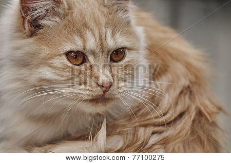 Kitten Looks Ahead