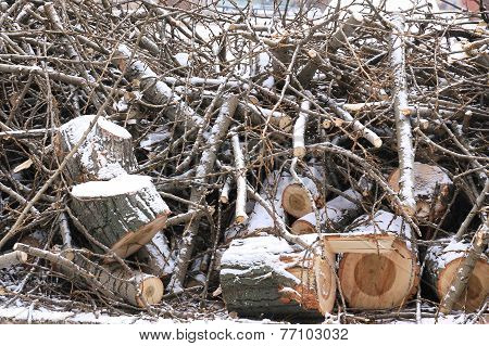 Sawn Wood Logs And Small Twigs In The Snow