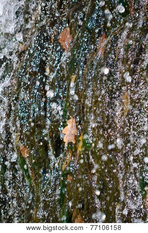Dry Oak Leaf Water Splashes