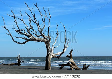 Beach with driftwood