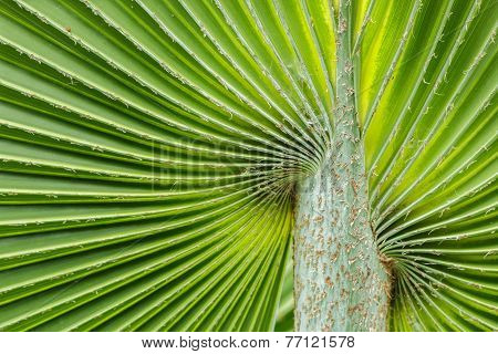 Soft Palm Leaves